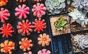 Commercializzazione dei prodotti di terzi per i florovivaisti