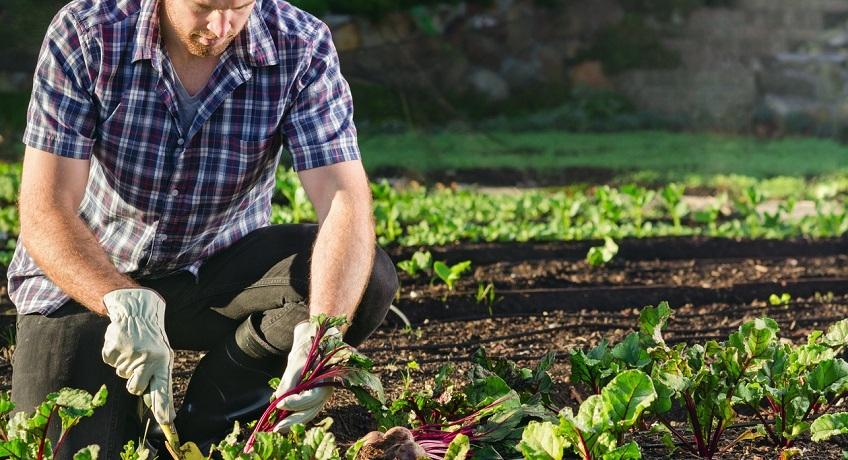 Agricoltura: sconti contributivi per l'avvio di attività di lavoro autonomo
